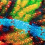 У Китаї створили штучну електронну шкіру», що змінює колір