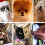 Королі соцмереж: найпопулярніші тварини в інтернеті