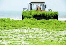 Вчені: потепління провокує зростання токсичних водоростей у водоймах