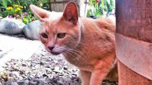 У США помер єдиний в світі кіт, який займав пост мера