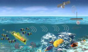 Флот США хоче використовувати морських тварин для виявлення підводних човнів