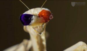 Вчені відкрили, що богомоли використовують невідомий вид зору