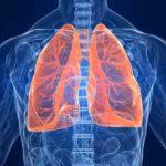 Вченим вперше вдалося відтворити легеневу тканину