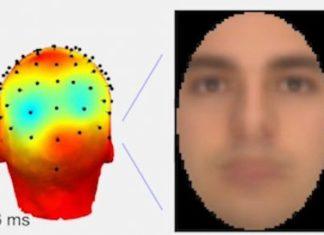 Комп'ютерний сканер навчився розпізнавати візуальні образи, про які думає людина