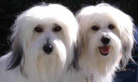 Що потрібно знати, якщо ви вирішите клонувати свою улюблену собаку