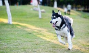 GoPro вчить штучний інтелект думати як собака