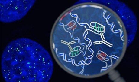 У живих клітинах вперше знайдено ДНК у формі вузла