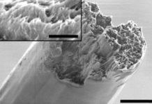 Нова нанодеревина перевершила по міцності світового рекордсмена — павуковий шовк