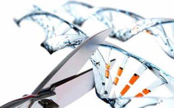 За допомогою редактора геному CRISPR вдалося відтворити стадії розвитку меланоми